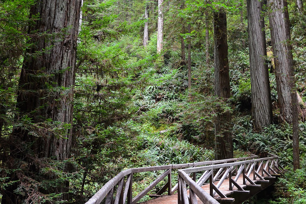 Coastal Redwood Forest Hiking Fern Hook Vacation Cabins Jedediah Smith