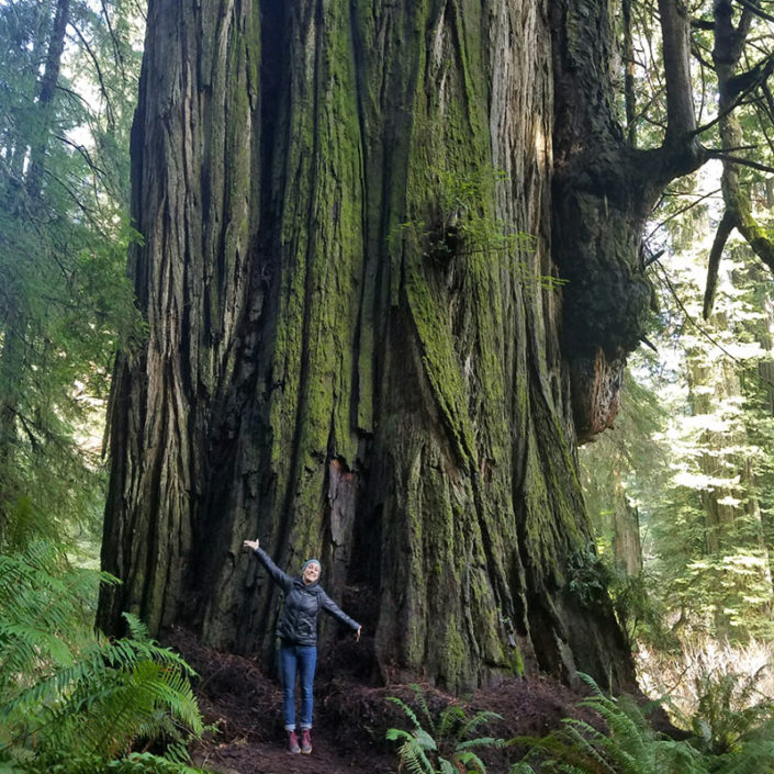 Explore Giant Redwood Forest Jedediah Smith Park